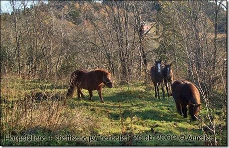 nerbeitet-26okt2009_01