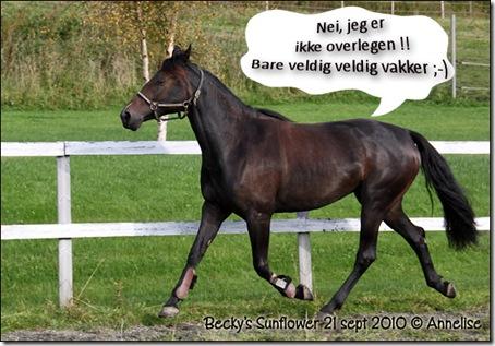 damene21sept_02