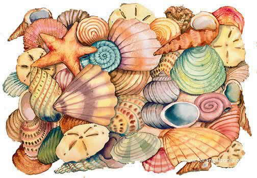 Seashells : Wonderful Collection