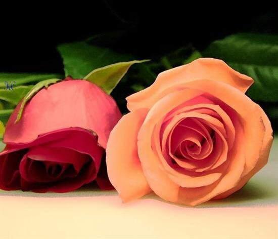very nice and beautiful flower photos  wiresmash, Beautiful flower