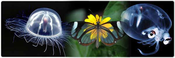 Top 10 Transparent Animals!