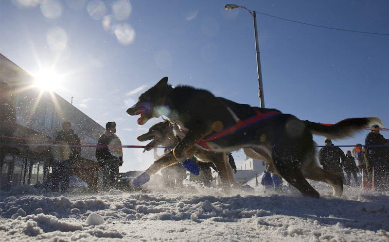Dog sled photos from several races (Yukon Quest Race, Cam-Am Crown Race) in the Northern Hemisphere (Alaska)
