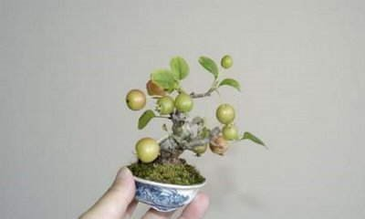 Bring Nature Indoors with Bonsai Trees. They're beautiful, refreshing and make great gifts!