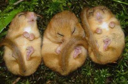 Cute Small Animals