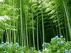 Story of the Fern and the bamboo - Never regret a day in your life. Good days give you happiness. Bad days give you experiences. Both are essential to life. Keep going....