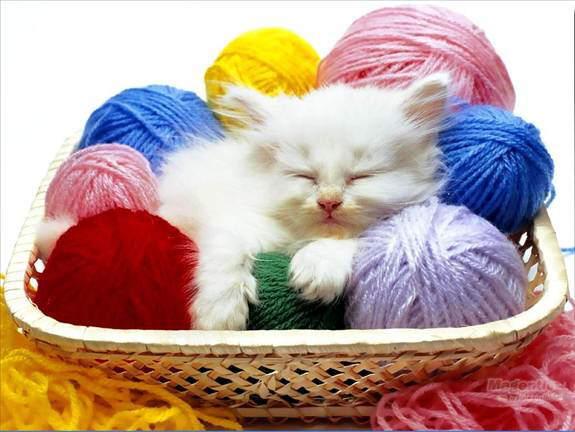 Cutie Cutie Kittens