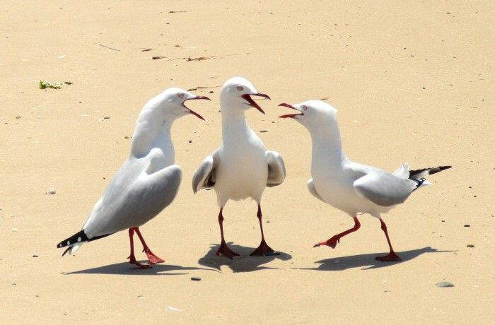 Funny Animal Photos :)