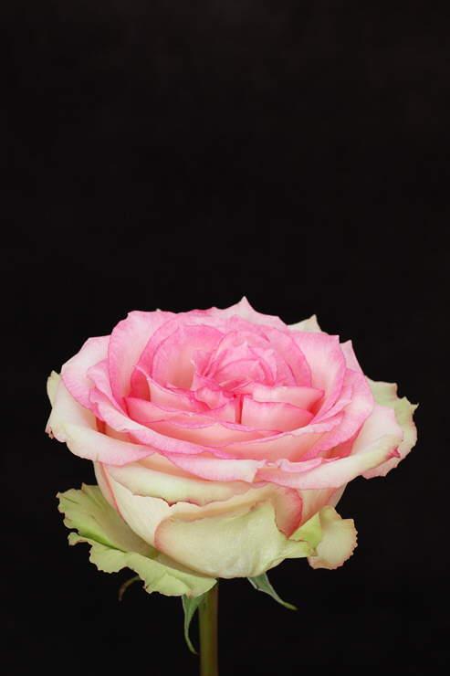 Really Beautiful Flowers
