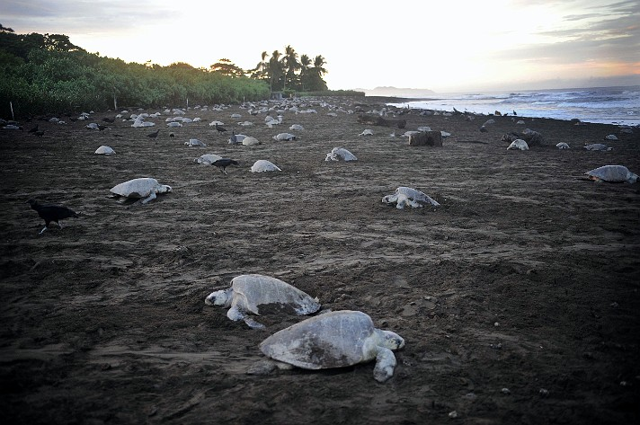 Save the Turtles - Habitat destruction photos from Costa Rica