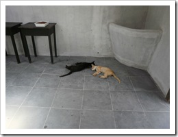 Granja Florestal - Cres-Sendo 02 11 029