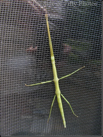 Walking Stick One