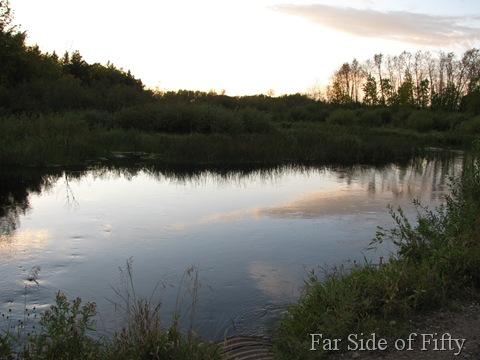 Dead beaver area