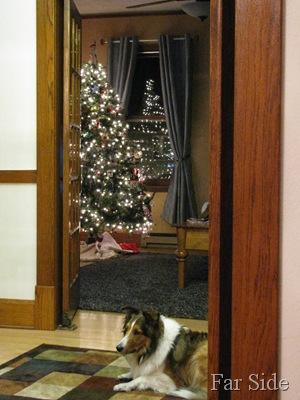 Miney December 09, 2010