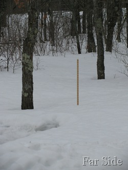 March 17 Snowstick