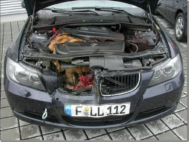 BMW Hits Deer!