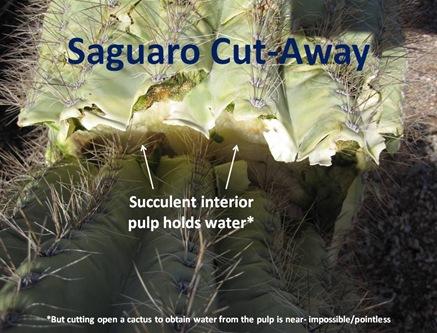 S Cutaway
