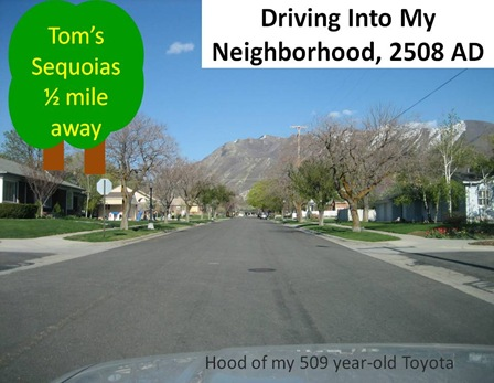 Sequoia Neighborhood