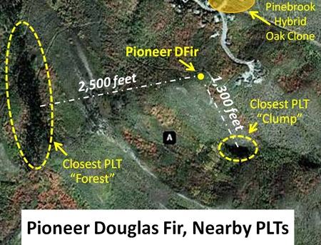 Pioneer DFir Map