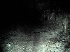 Night Trail2