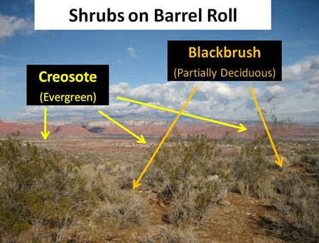 Shrubs Barrel Roll