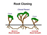 Root Cloning Captions