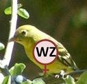 Bird WZ cropped