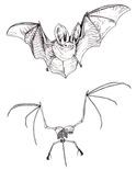 bat vs skeleton