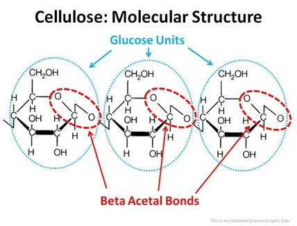 Beta Acetal Bonds in Cellulose
