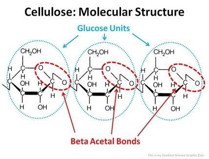 Beta Acetal Bonds in Cellulose