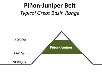 PJ Belt Basic