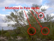 PV Misteltoe Caption