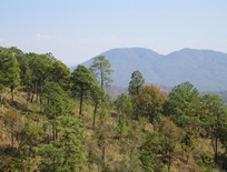Michoacana Pines 2 06