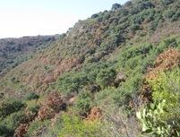 Maxipinon on hillside2