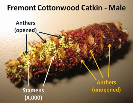 Catkin caption