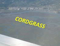 Cordgrass View Caption