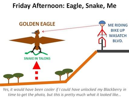 eagle snake me