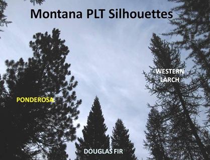 PLT Silhouettes