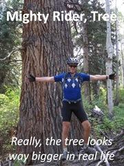 Colin Tree
