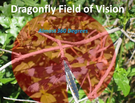 Dragonfly Field Vision