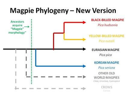 New Phylogeny