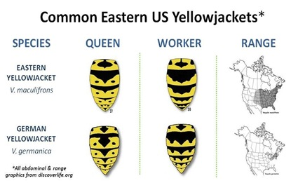 Eastern US YJ Species