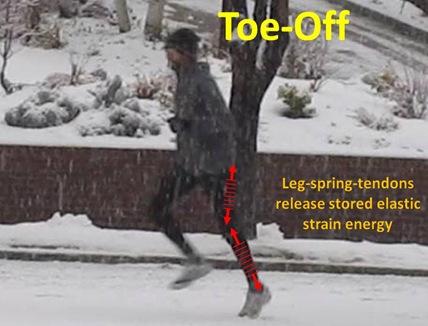 Toe-Off