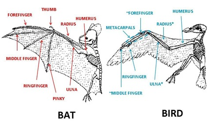 bat bird bones captions