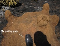 Mound Foot