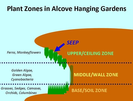 Alcove Plant Zones Diagram