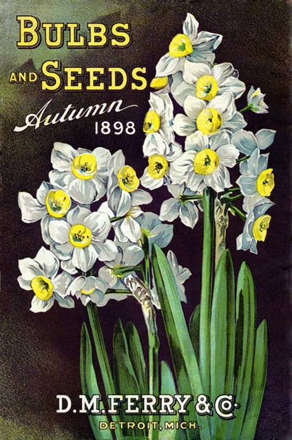 daffodil-cover-on-seed-catalog