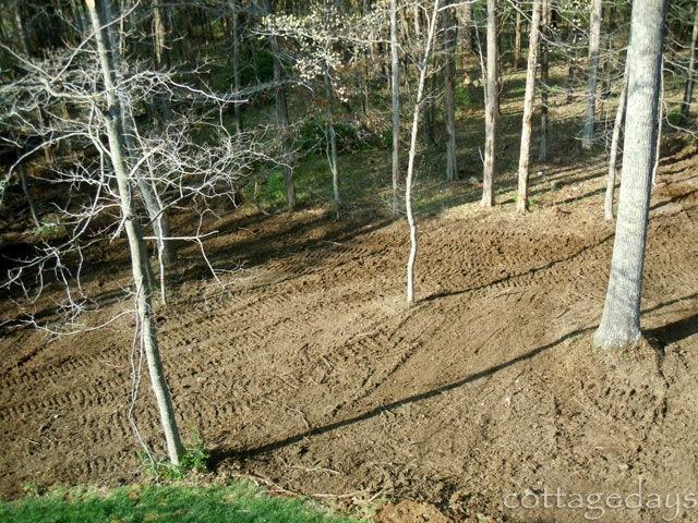 backyard-clearing