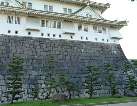 pinheiro ao redor do castelo