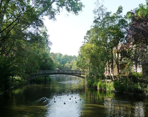 ponte com patos glicinias