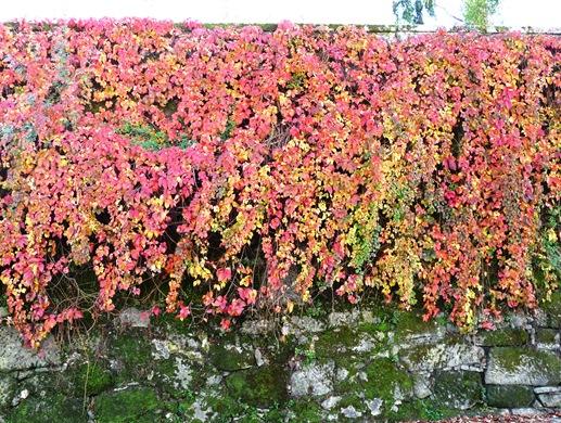18. Fundão - folhas de outono